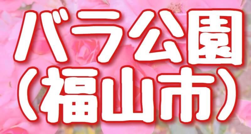 広島県福山市のバラ公園のアイキャッチ